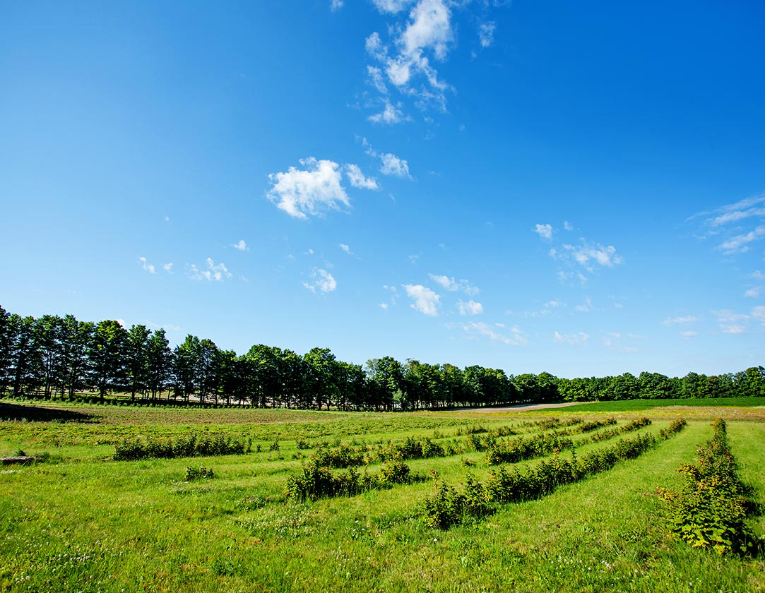 remarkable-braestonefarm